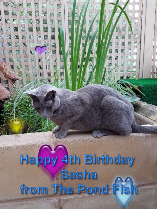 happy-fourth-birthday-sasha