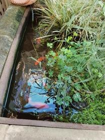 pond-2
