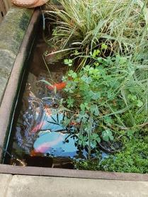 pond-3