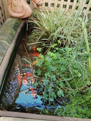 pond-5